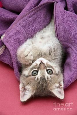 Animal Portraiture Photograph - Tabby Kitten by Jane Burton