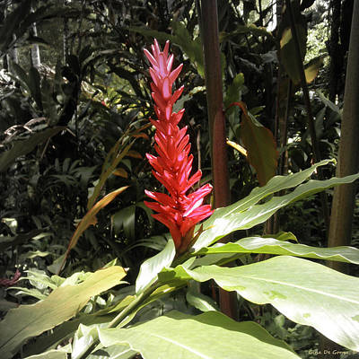 Photograph - Tropical Flower by Gina De Gorna