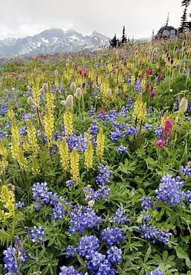 Wildflower Meadow Print by Bob Gibbons