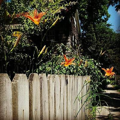 Lilies Wall Art - Photograph - Instagram Photo by Jami Tammerine