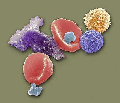 Blood Cells, Sem Art Print by Steve Gschmeissner