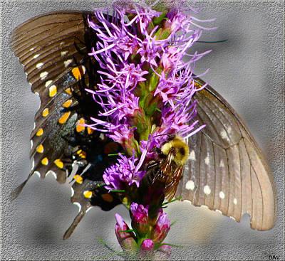 Butterfly Design Collection Art Print by Debra     Vatalaro