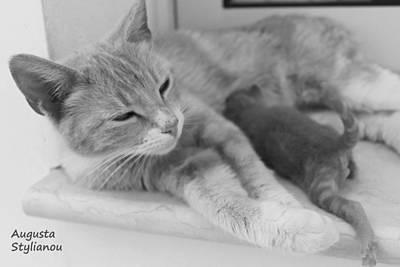 Photograph - Cat Maternity by Augusta Stylianou