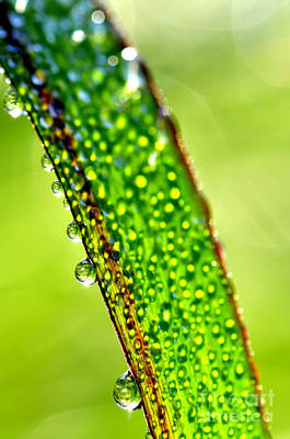 Dewdrops On Lemongrass Art Print by Thomas R Fletcher