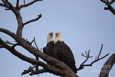Photograph - Eagles by Jeanne Andrews