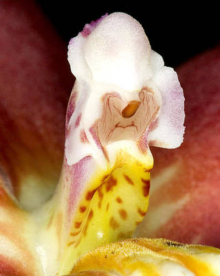 Art Print featuring the photograph Exotic Orchid Flower by C Ribet