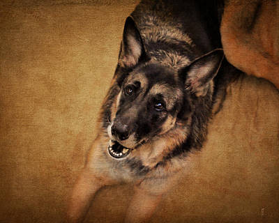 Herding Dog Photograph - German Shepherd by Jai Johnson