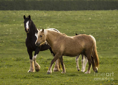 Palomino Foal Photograph - Horses On The Meadow by Angel Ciesniarska