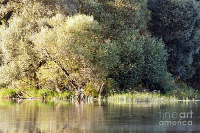 Czintos Photograph - Lake Reflections by Odon Czintos