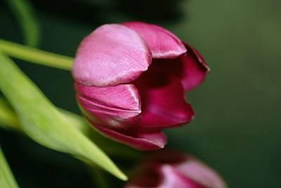 Purple Flowers Digital Art - Tulips by Cathie Tyler