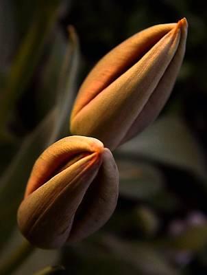 Tulips Art Print by Odon Czintos