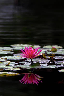 Animal Paintings David Stribbling - Water Lily by Robert Ullmann