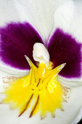 Exotic Orchids Of C Ribet Art Print by C Ribet