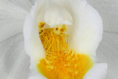 Soft Photograph - Exotic Orchids Of C Ribet by C Ribet