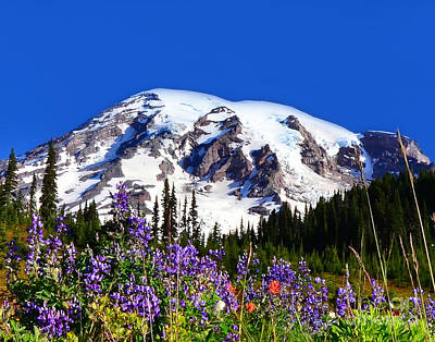 Photograph - #74 Blooms At Mt Rainier by Jack Moskovita