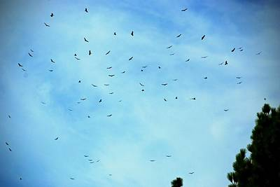 Photograph - 74 Turkey Vultures by Eric Tressler