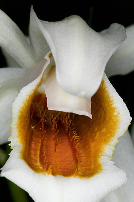 Photograph - Exotic Orchids Of C Ribet by C Ribet