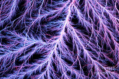 Photograph - Electrical Discharge Lichtenberg Figure by Ted Kinsman