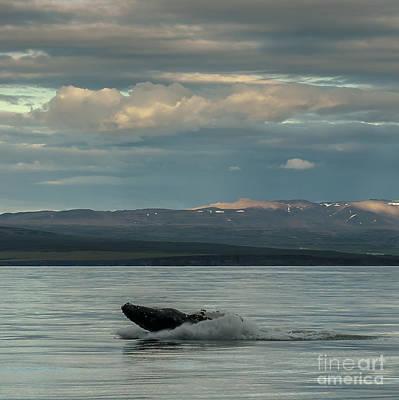 Photograph - Humpback Whale by Jorgen Norgaard