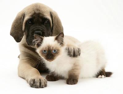 Puppy And Kitten Print by Jane Burton