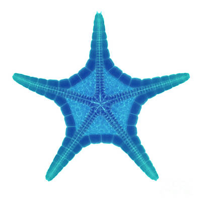 Photograph - X-ray Of Starfish by Ted Kinsman