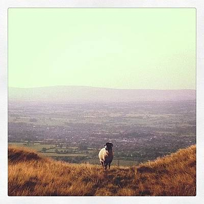 Sheep Photograph - Instagram Photo by Aislinn Wood