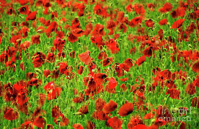 Rural Scene Digital Art - Field Of Poppies. by Bernard Jaubert