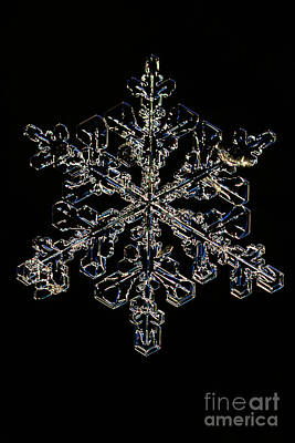 Snowflake Art Print by Ted Kinsman