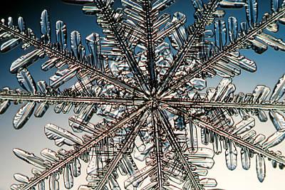 Snowflake Art Print by Ted Kinsman