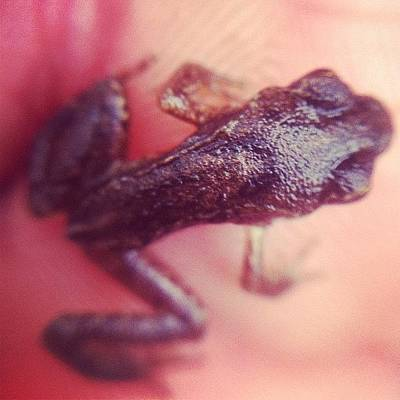 Reptiles Wall Art - Photograph - A Baby Frog by Daniel Hills