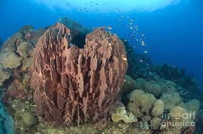 A Barrel Sponge Attached To A Reef Art Print by Steve Jones