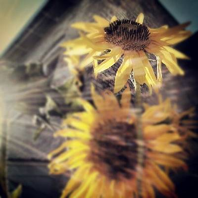 Sunflowers Wall Art - Photograph - A Beautiful Existence by Tina Marie