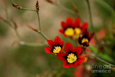 Islamabad Photograph - A Beautiful Pair by Syed Aqueel