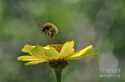 A Bee Art Print by Sylvie Leandre