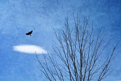 Photograph - A Bird A Tree A Cloud by Emily Stauring
