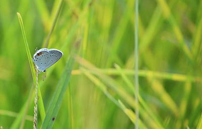 Photograph - A Blue And Grass by JD Grimes
