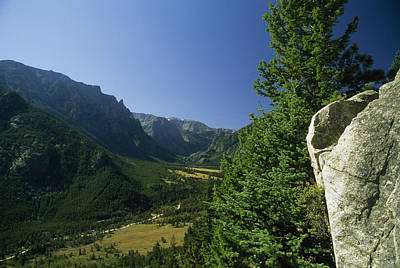 Beartooth Mountain Range Photograph - A Boulder And Conifer Trees by Gordon Wiltsie