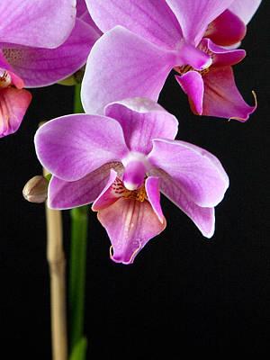 A Brilliant Orchid Art Print by Charlie Osborn