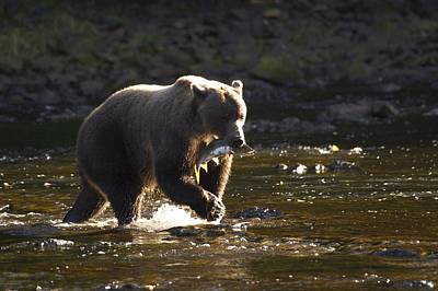 A Brown Bear With A Freshly Caught Art Print by Ralph Lee Hopkins