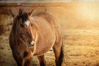 Ranch Photograph - A Buckskin's Evening Glow by Megan Chambers