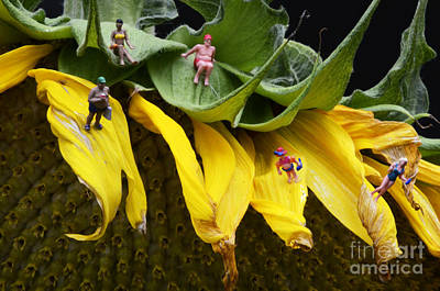 Art For The Bathroom Photograph - A Busy Day At Sunflower Beach by Bob Christopher