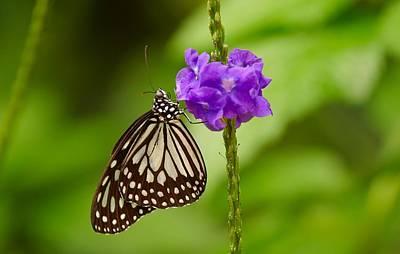 Blend Photograph - A Butterfly On A Flower by Raven Regan
