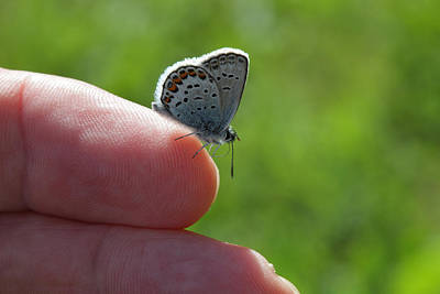 A Butterfly On The Finger Art Print