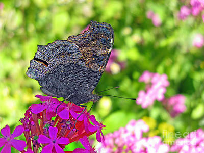 Photograph - A Butterfly On The Pink Flower by Ausra Huntington nee Paulauskaite