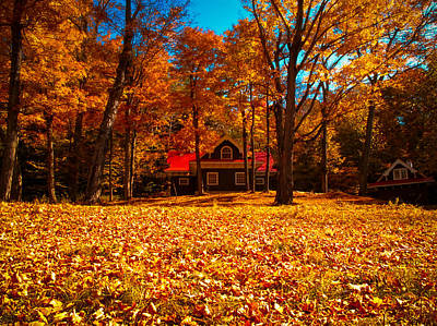Photograph - A Carpet Of Orange Leaves by Chantal PhotoPix