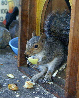 Photograph - A Casual Morning At The Squirrel Snackbar by Ben Upham III