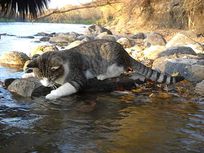 Photograph - A Cat Goes Fishing by Kent Lorentzen