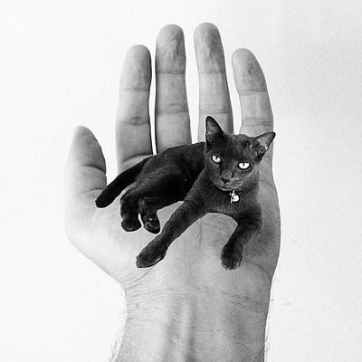 Edit Photograph - A Cat In The Hand Is Worth by Cameron Bentley