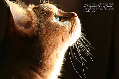 A Cat Prayer Art Print by Wendi Matson