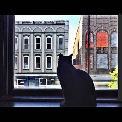 Photograph - A Cat's View by Joan Meyland